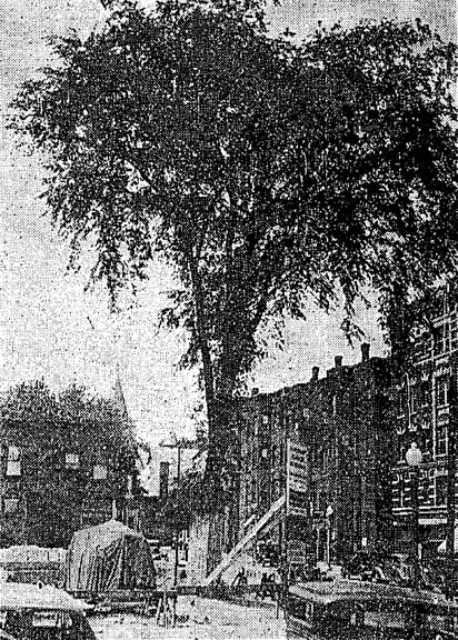 Appleton Street School -- Tree Named for Washington