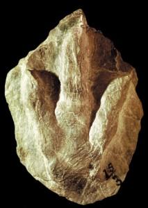 First Dinosaur Footprint